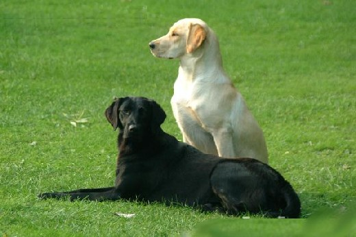 pair-of-dogs.jpg